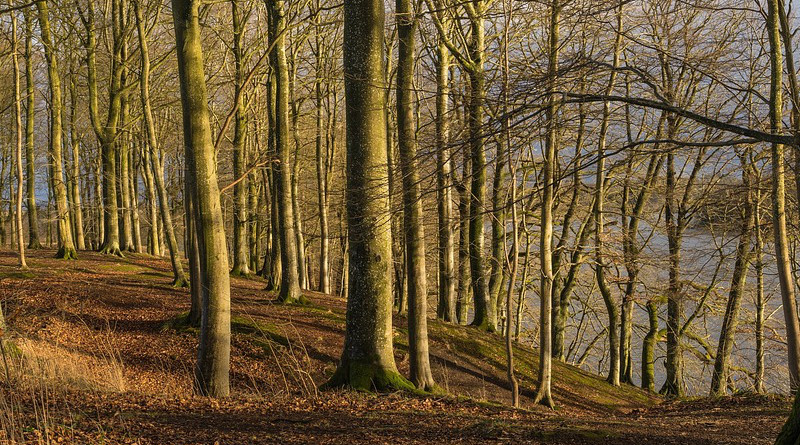 Trees Forest Landscape Scenic Winter Shadows