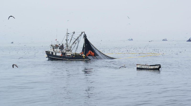 Peruvian industrial purse seiners in full activity of anchovy fishing. CREDIT © IRD - Arnaud Bertrand