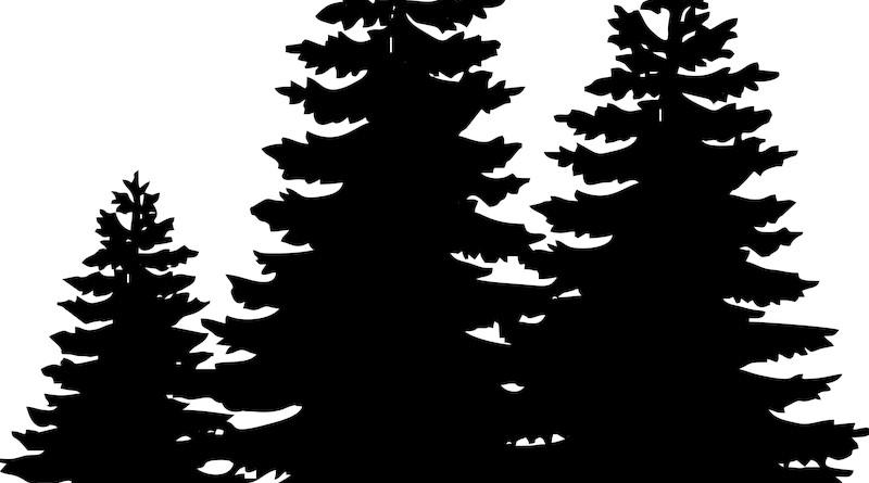 Pine Trees Christmas Sillueta Winter