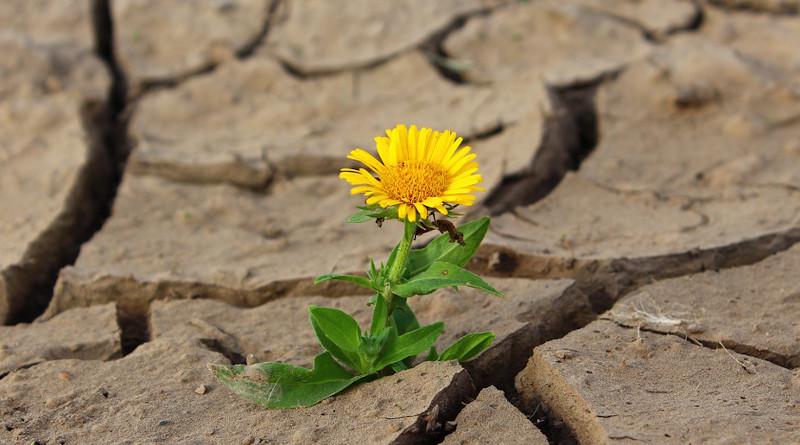 Resistance Flower Life Crack Desert Drought Survival
