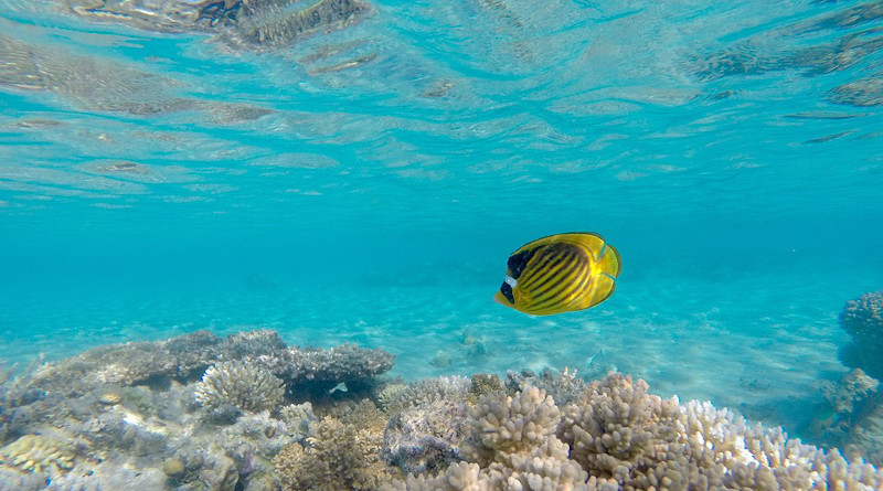 Coral Reef Angelfish Underwater Sea Underwater World Fish