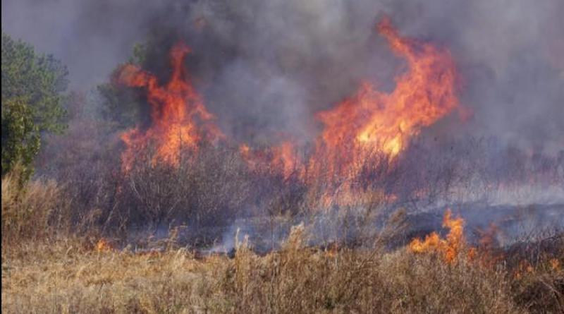 A proscribed burn at Pocosin Lakes National Wildlife Refuge. CREDIT: Curt Richardson, Duke University
