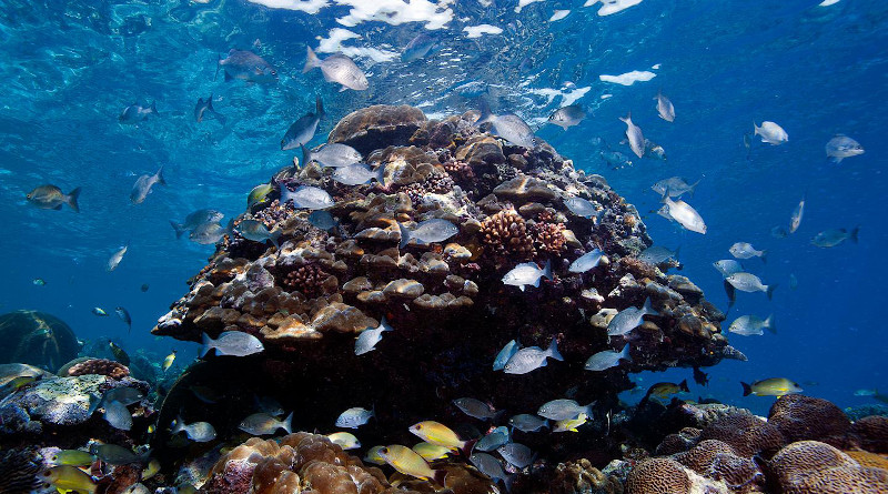 Reefs in the Solomon Islands were covered with abundant and diverse coral communities, but few fish. Most of the big fish were gone, and many of the nearshore reefs appeared to be overfished. CREDIT: © Khaled bin Sultan Living Oceans Foundation/Ken Marks