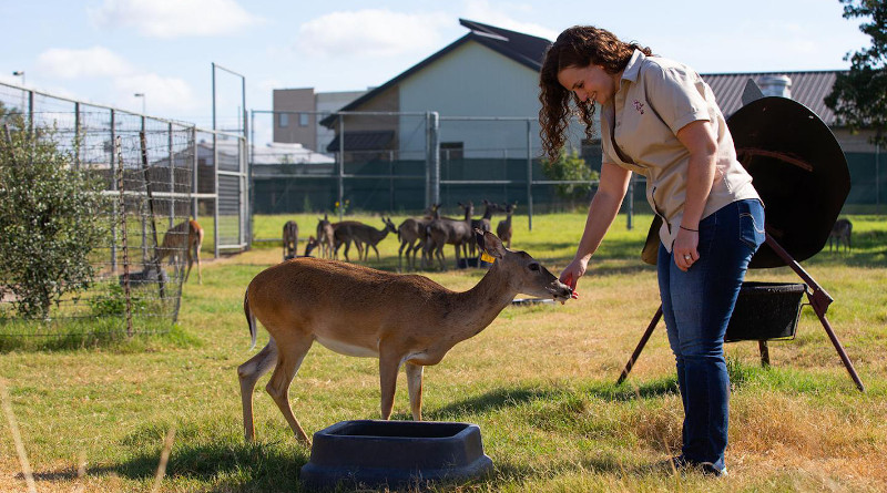 Dr. Jamie Benn Felix, along with a team of Texas A&M researchers, is working to develop an anthrax vaccine that could be delivered orally to deer and wildlife. CREDIT: Texas A&M University College of Veterinary Medicine & Biomedical Sciences