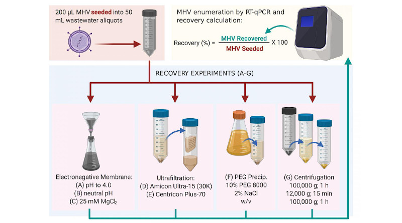 Methods used to recover MHV in this study. The most successful was method (C), followed by method (B) (Warish Ahmed et al., Science of The Total Environment, June 5, 2020). CREDIT: Warish Ahmed et al., Science of The Total Environment, June 5, 2020