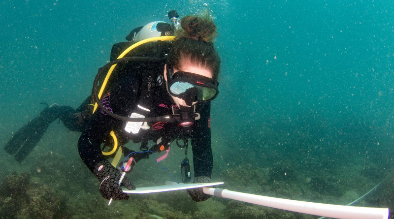 Joleah Lamb, assistant professor of ecology & evolutionary biology at UCI, collecting data on urban reefs in Myanmar. CREDIT: Michelangelo Pignani