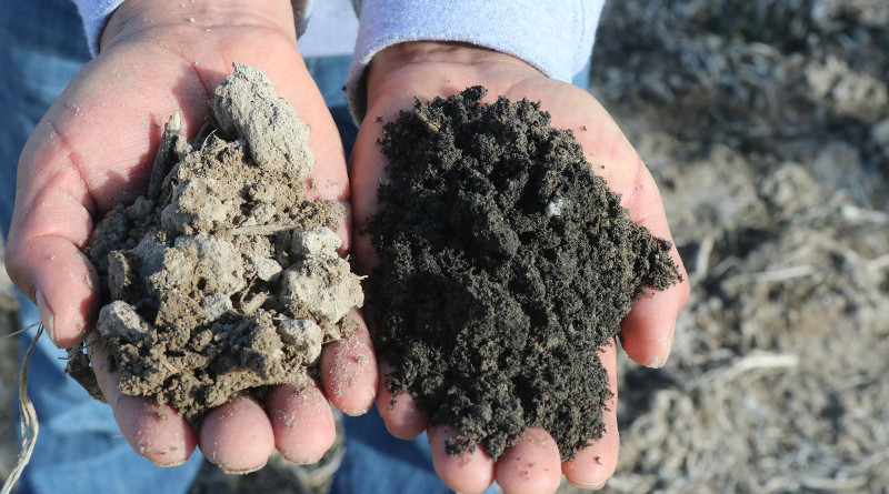 Application of char with about 30% C changed the color of the soil. CREDIT: Photo courtesy of Michael Kaiser.