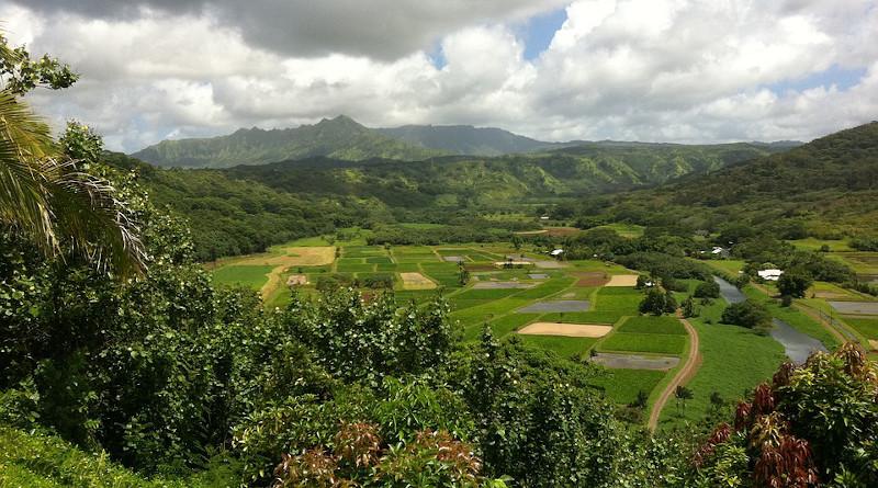 Hawaii Farms Landscape Agriculture Tropical