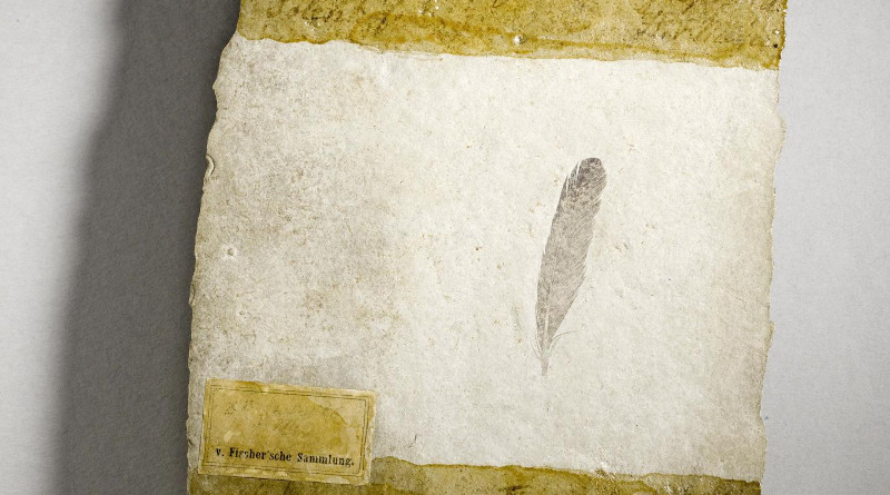 Fossil discovered at the site of four Archaeopteryx skeletons. CREDIT: Museum fur Naturkunde