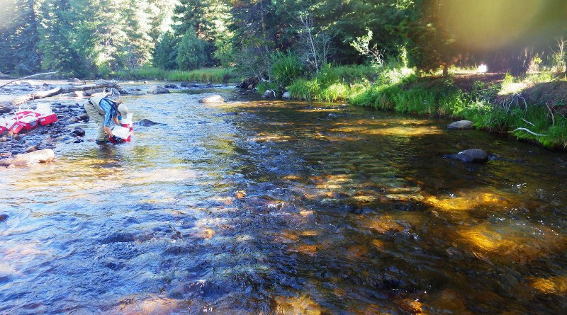 Ecologist Janet Miller collects rock trays in the Cache La Poudre River in Colorado. CREDIT: Photo courtesy of Janet Miller