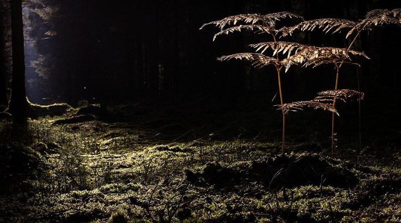 Glade Forest Sun Exposure Fern Vascular Pores Plant