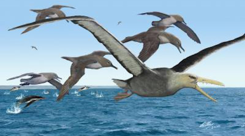 An artist's depiction of ancient albatrosses harassing a pelagornithid -- with its fearsome toothed beak -- as penguins frolic in the oceans around Antarctica 50 million years ago. CREDIT: Copyright Brian Choo