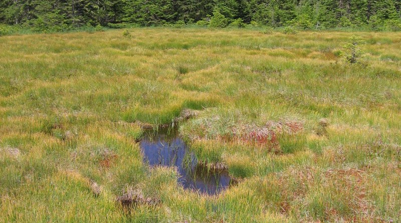 The Hirschbäder mire, a bog complex of living raised bog with red peat moss, stagnant raised bog and interspersed open water areas, the so-called Schlenken. CREDIT: Thomas Sperle