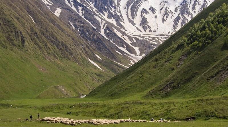 Caucasus Georgia Truso Valley Summer Sheep