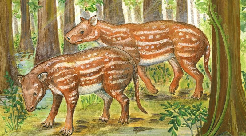 Life reconstruction of Cambaytherium (artwork by Elaine Kasmer) CREDIT: Elaine Kasmer