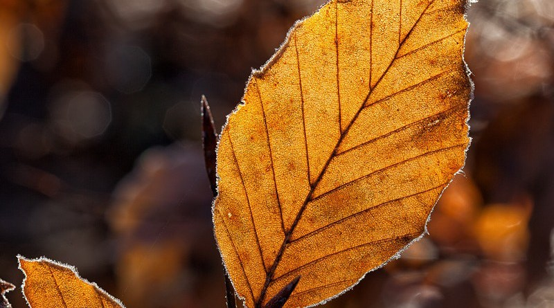 Leaves Leaf Fall Foliage Autumn Autumn Light