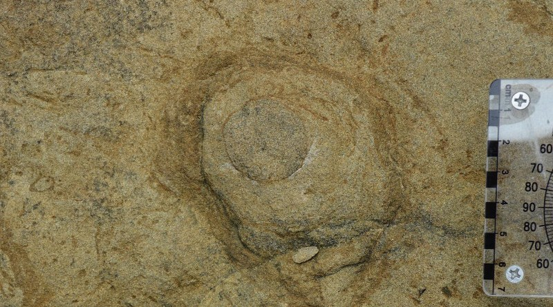 Pennichnus burrow opening. CREDIT Yu-Yen Pan