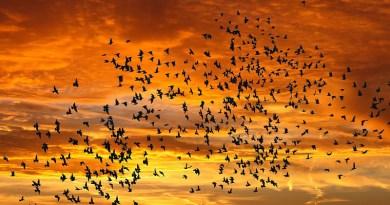 Nature Sunrise Bird Flight Sunset