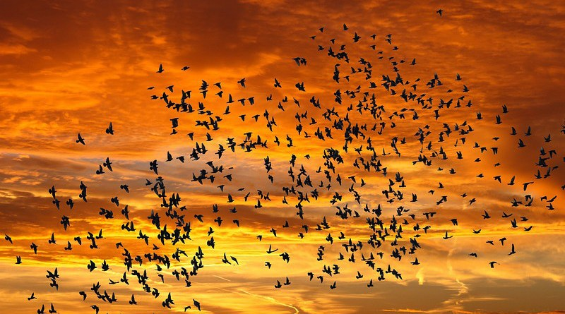 Nature Sunrise Bird Flight Sunset