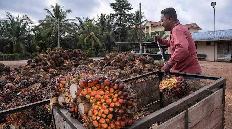 A worker unloads kernels from palm trees at a palm-oil collection center Batu Pahat, in Malaysia's Johor state, June 1, 2017. [S. Mahfuz/BenarNews]