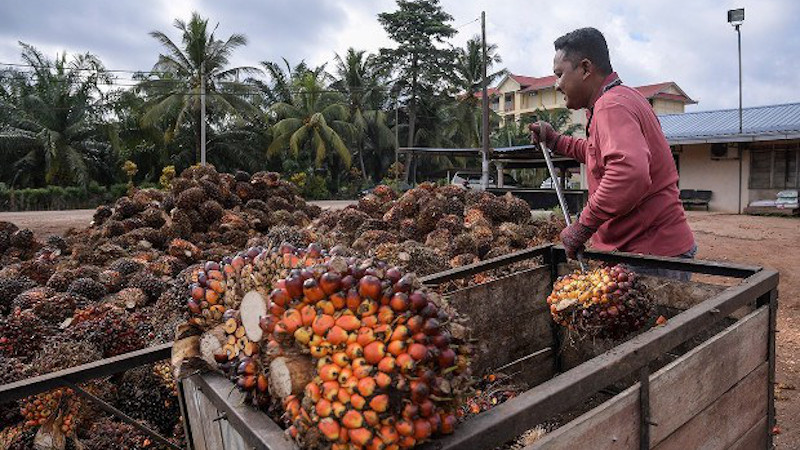 Palm Oil: Malaysian Economic Interests And Foreign Relations – Analysis