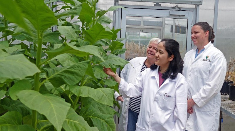 l-r Dr Florence Danila, Professor Susanne von Caemmerer and Dr Tory Clarke working on finding the best targets by following CO2 journey through the leaf CREDIT Natalia Bateman, CoETP