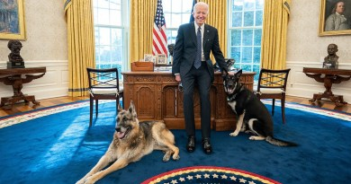 President Joe Biden poses with the Biden family dogs Champ and Major in the Oval Office of the White House. (Official White House Photo by Adam Schultz)