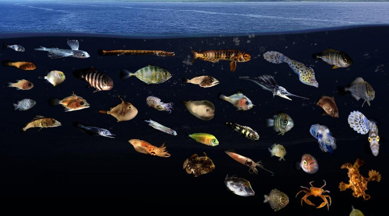 Composite image showing just a small portion of the remarkable diversity of larval and juvenile fishes and invertebrates found living in surface slick nurseries along West Hawaii Island. CREDIT Credit: Larval photos: Jonathan Whitney (NOAA Fisheries), Slick photo: Joey Lecky (NOAA Fisheries).