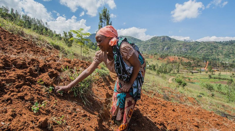 Women are often 'invisible' in agriculture, researchers say. CREDIT Georgina Smith
