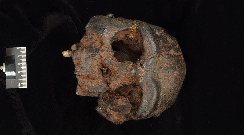 Replica of the Sangiran 17 Homo erectus cranium from Java. CREDIT Photo supplied by the Trustees of the Natural History Museum.
