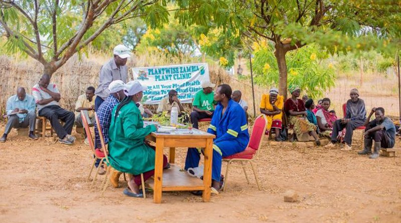 Farmers receive advise on how to manage crop pests and diseases at a plant clinic in Zambia run as part of the CABI-led Plantwise programme. CREDIT CABI