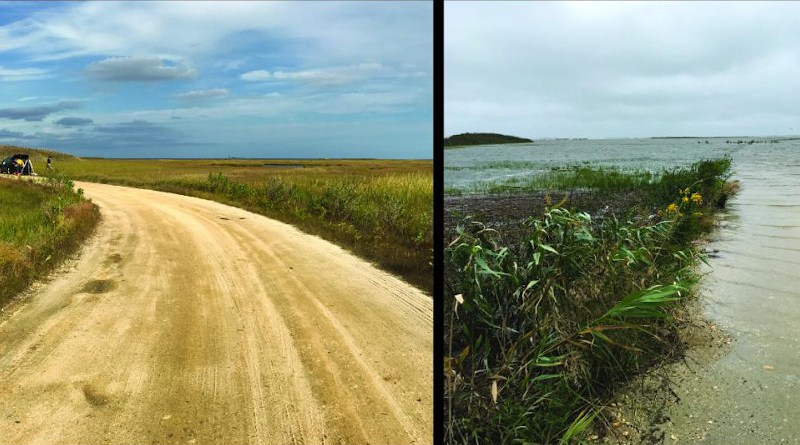Sea-level rise leads to increased flooding at the Edwin B. Forsythe National Wildlife Refuge in New Jersey. The photos show approximately the same view in October (left) and September 2016. Both photos show the same round hill in the upper left corner. CREDIT Jennifer S. Walker, Rutgers University