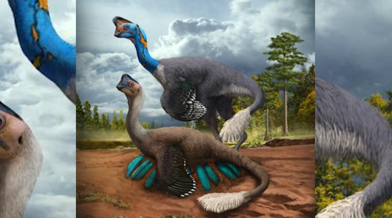 An attentive oviraptorid theropod dinosaur broods its nest of blue-green eggs while its mate looks on in what is now Jiangxi Province of southern China some 70 million years ago. Artwork by Zhao Chuang CREDIT © Zhao Chuang