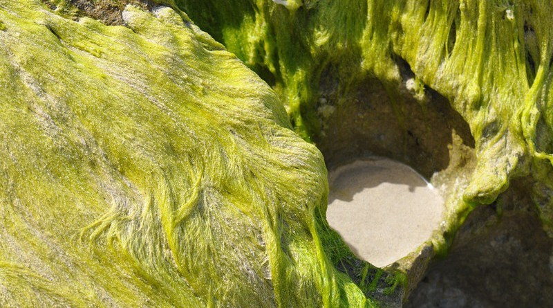 Seagrass Cliffs Sand Green Cliff