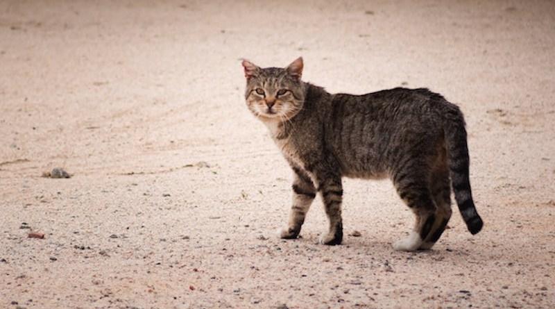 Stray Cat, California City, CA, USA. Credit: Brian Wangenheim on Unsplash