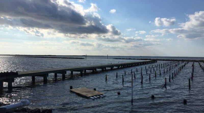 Oysters were raised at this medium salinity site on long lines in Grand Isle for two years before being cross-bred with oysters raised at a low salinity site at the Louisiana University Marine Consortium in Chauvin as part of this study. CREDIT Photo Credit: Morgan Kelly, LSU