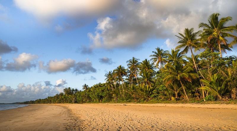 Mission Beach Australia Palm Trees Beach Queensland