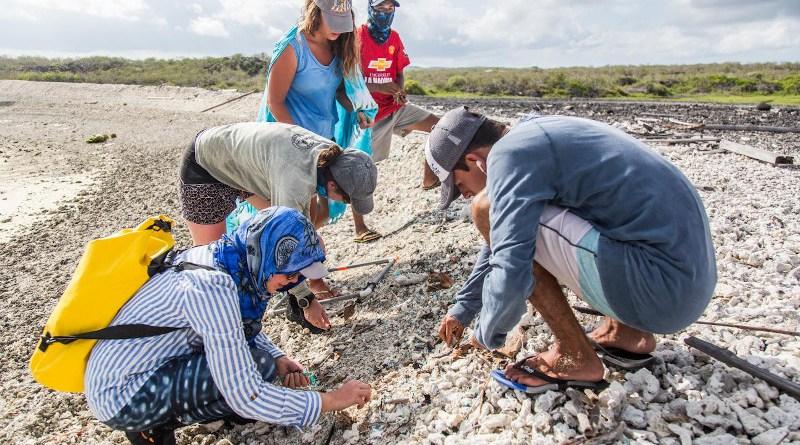 Plastic sampling on a beach in Galapagos. CREDIT Adam Porter