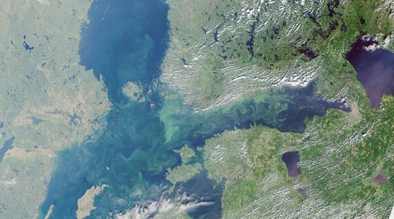 A satellite image shows excess algae growth and eutrophication of the Baltic Sea in 2018. CREDIT ESA Copernicus Sentinel