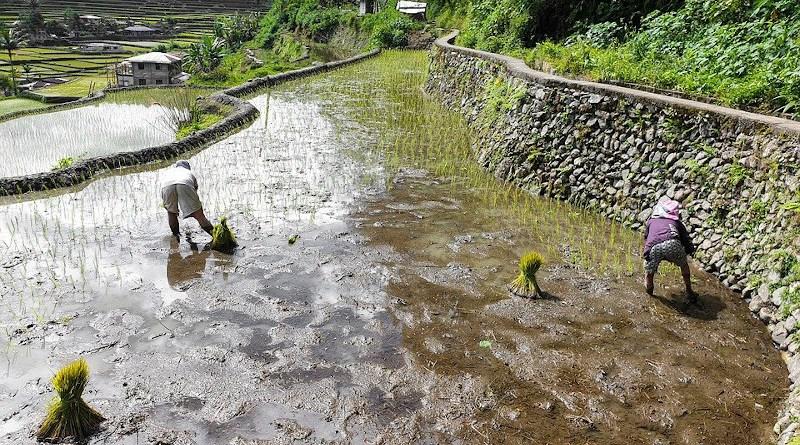 Rice Terraces Philippines Banaue Mountains
