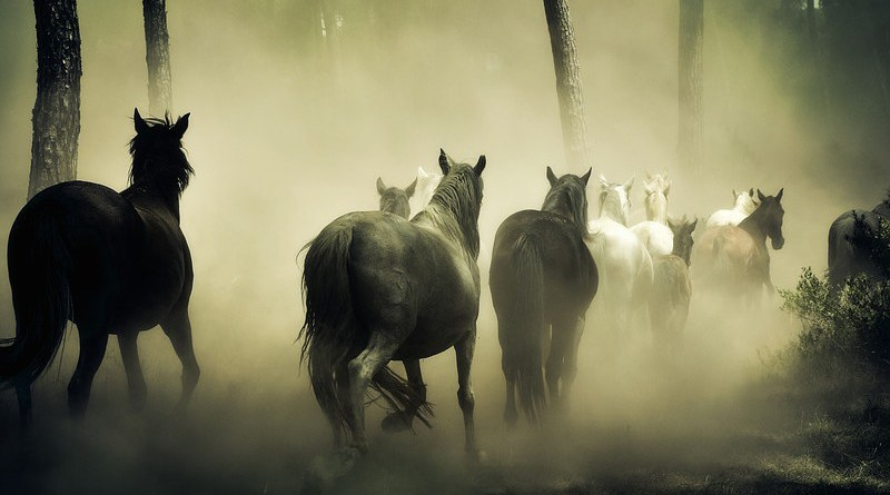 Horses Animals Wild Horses Nature Herd Of Horses