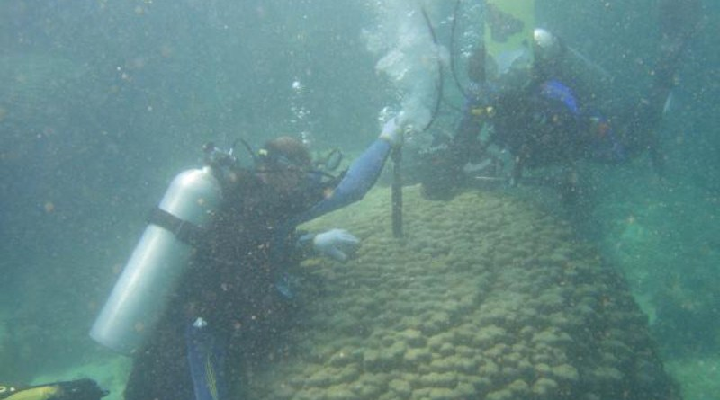 Collecting coral samples in the waters off Oman (Photo: Tsuyoshi Watanabe). CREDIT Tsuyoshi Watanabe