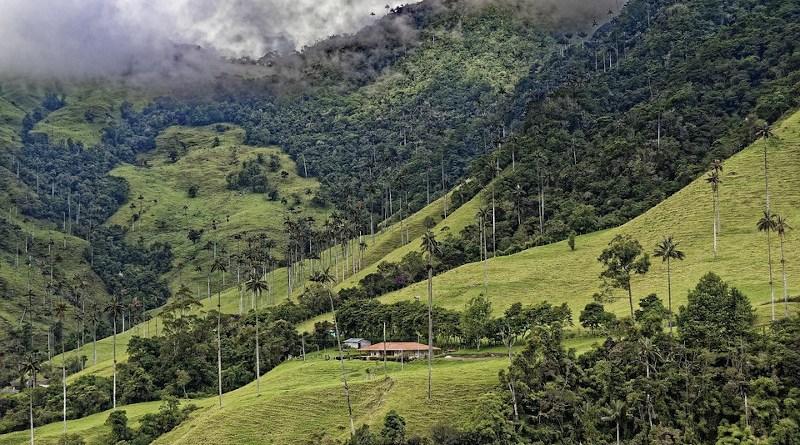 Forest Colombia El Bosque De Palmas Palm Trees