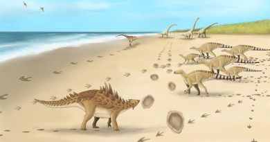 A palaeoartist's impression of the dinosaurs and their footprints. CREDIT Megan Jacobs, University of Portsmouth