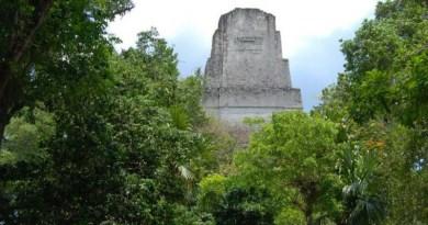 A pyramid at Tikal rises from the rainforest in Guatemala. CREDIT David Lentz