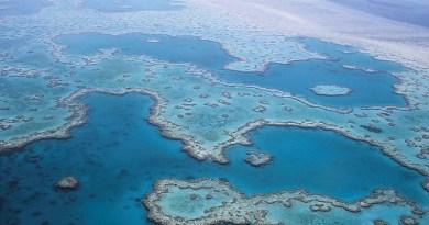 Great Barrier Reef Coral Australia Queensland Ocean