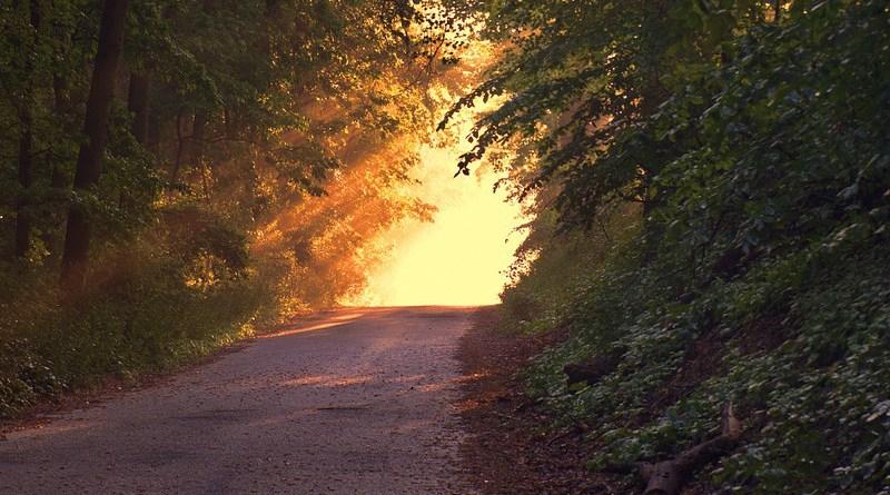 Twilight Forest Path Sunset Sunlight Way Dusk Trees Woods