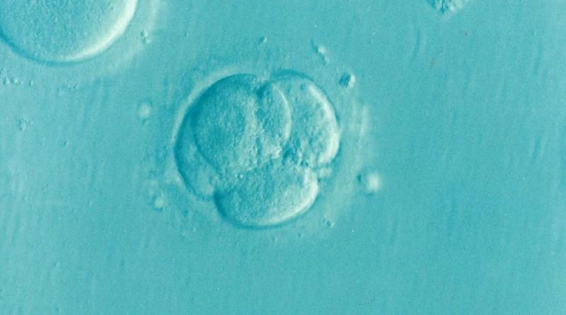 in vitro Embryo Ivf Icsi Infertility Fertility