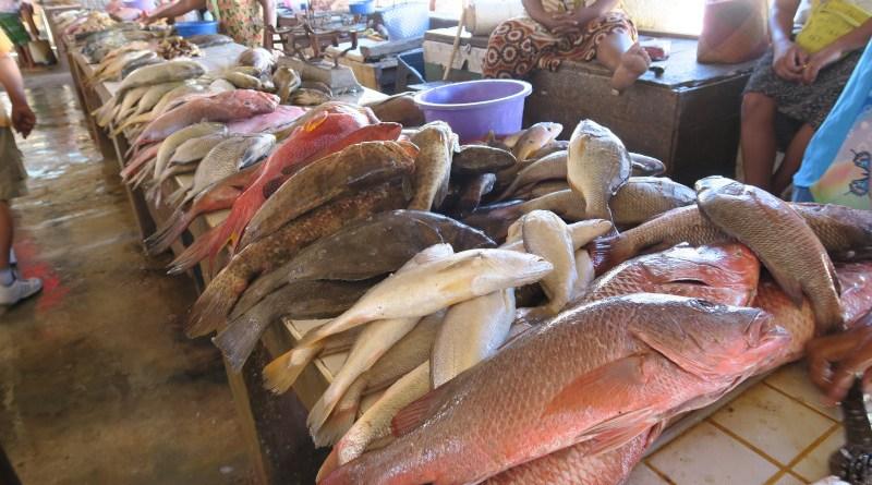 Coral reef fishes, fish market, Ambilobe, Madagascar.Credit Eva Maire