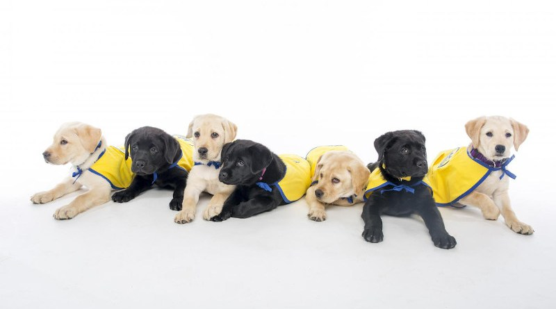 If you feel like your dog gets you in a way that most other animals don't, you're right. New research comparing dog puppies to human-reared wolf pups offers some clues to how dogs' unusual people-reading skills came to be. CREDIT canine.org, Jared Lazarus